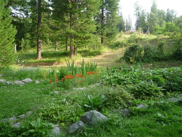 Solovki. The Botanic Garden
